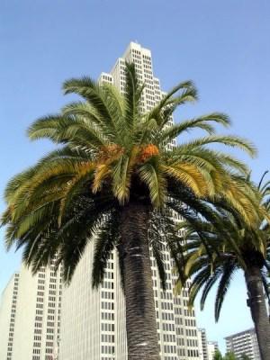 Embarcadero Palm
