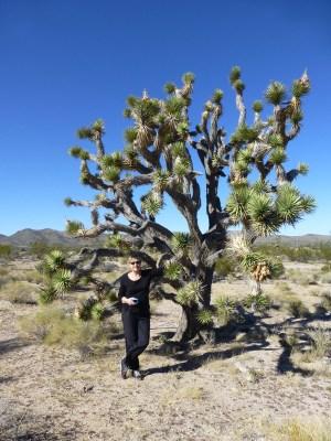 Yucca brevifolia (Joshua tree)