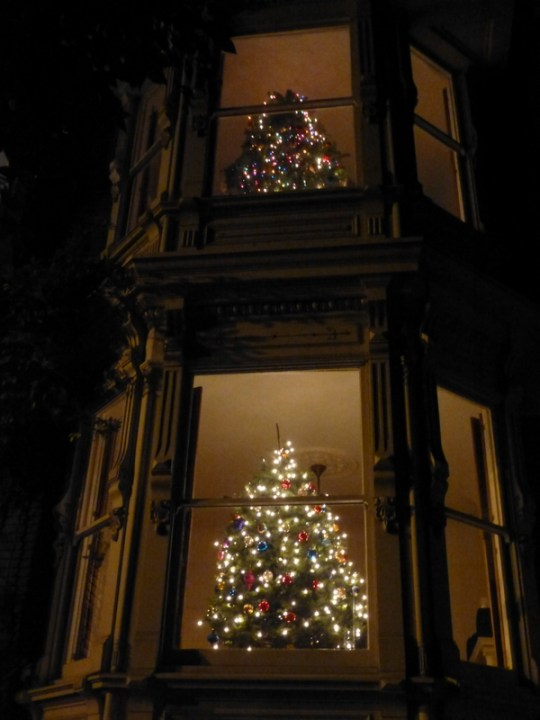 Noe Street Christmas trees