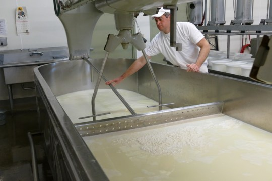 Curds being squeezed to the middle of the vat