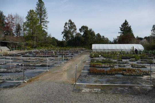 Lone Pine Gardens