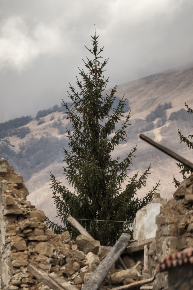 "A fir-tree between the ruins of some buildings destroyed by the earthquake that took place on August 24. Amatrice, Italy 2016. © Matteo Bastianelli for ""La Stampa"""