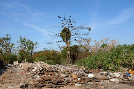 Vultures on a tree in the former dump of Jardim Gramacho, turned into a favela in 2012. On the left a man is seen walking among garbage. Rio de Janeiro, Brazil 2015. © Matteo Bastianelli
