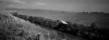 An Eurasian spoonbill (Platalea leucorodia) flies away from a former tank for salt collection at the Molentargius-Saline Regional Park. Quartu Sant'Elena, Italy 2015. © Matteo Bastianelli