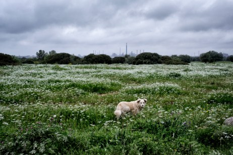 A sheep dog at the Fornaro brothers' farmhouse, in the background the chimneystack of the ILVA plant. The Fornaro family, owners of the farmhouse, saw all their animals slaughtered due to the dioxin infection caused by the nearby steelwork hub in 2008. Taranto, Italy 2016. © Matteo Bastianelli