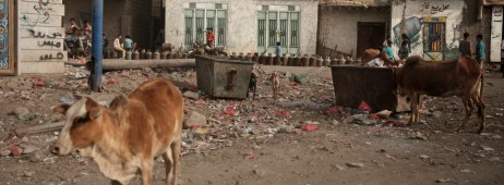 Men and children are seen waiting in line to refill their gas cylinders while some cows are looking for food in rubbish bin. The purchasing power across Yemen is at its worst due to blockade, the lack of jobs and income against prices that have increased on average by 300% for food and 700-800% for gas and fuel. Ad Dhale, Yemen 2018. © Matteo Bastianelli