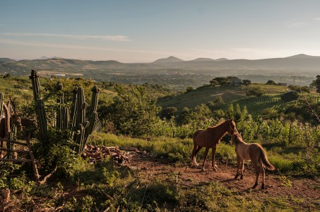 Some horses on a field in the Mogote Colorado village with a view of the countryside in the background. The access to clean water for domestic and agricultural use is a daily issue in rural ares throughout Mexico. Santiago Ayuquililla, Mexico 2019. © Matteo Bastianelli