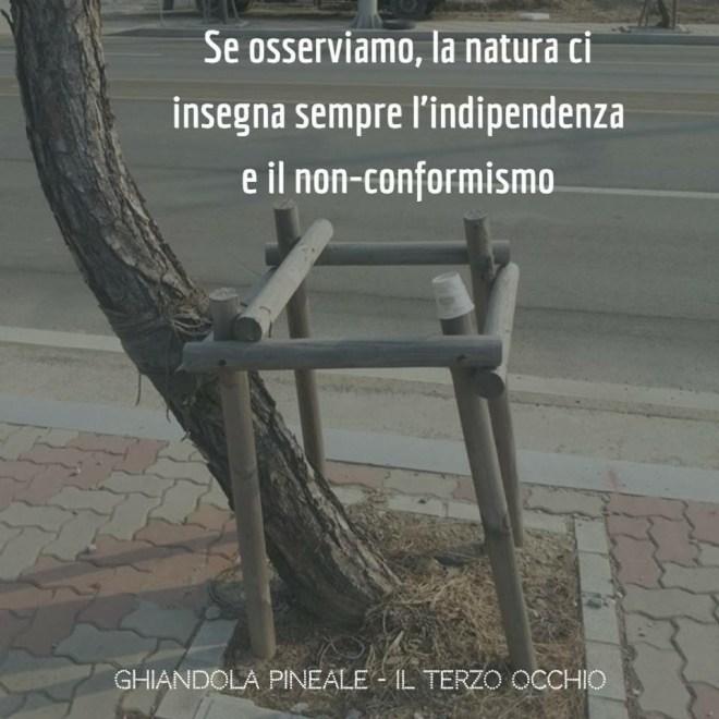 La natura può insegnarci l' indipendenza