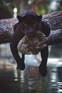Animale stanco che si riposa sul tronco di un albero