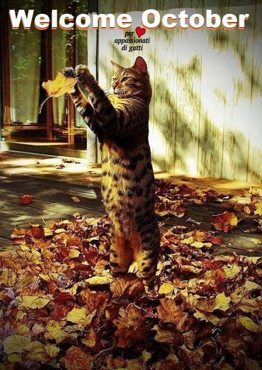 Buon ottobre agli appassionati di gatti