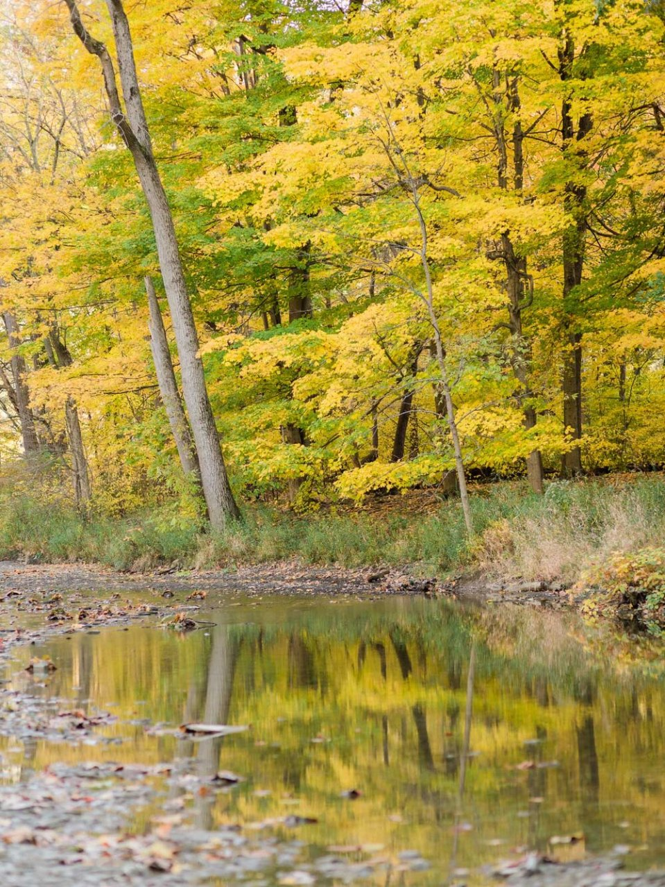 Fall Rocky River Reservation Engagement Photos-10.jpg