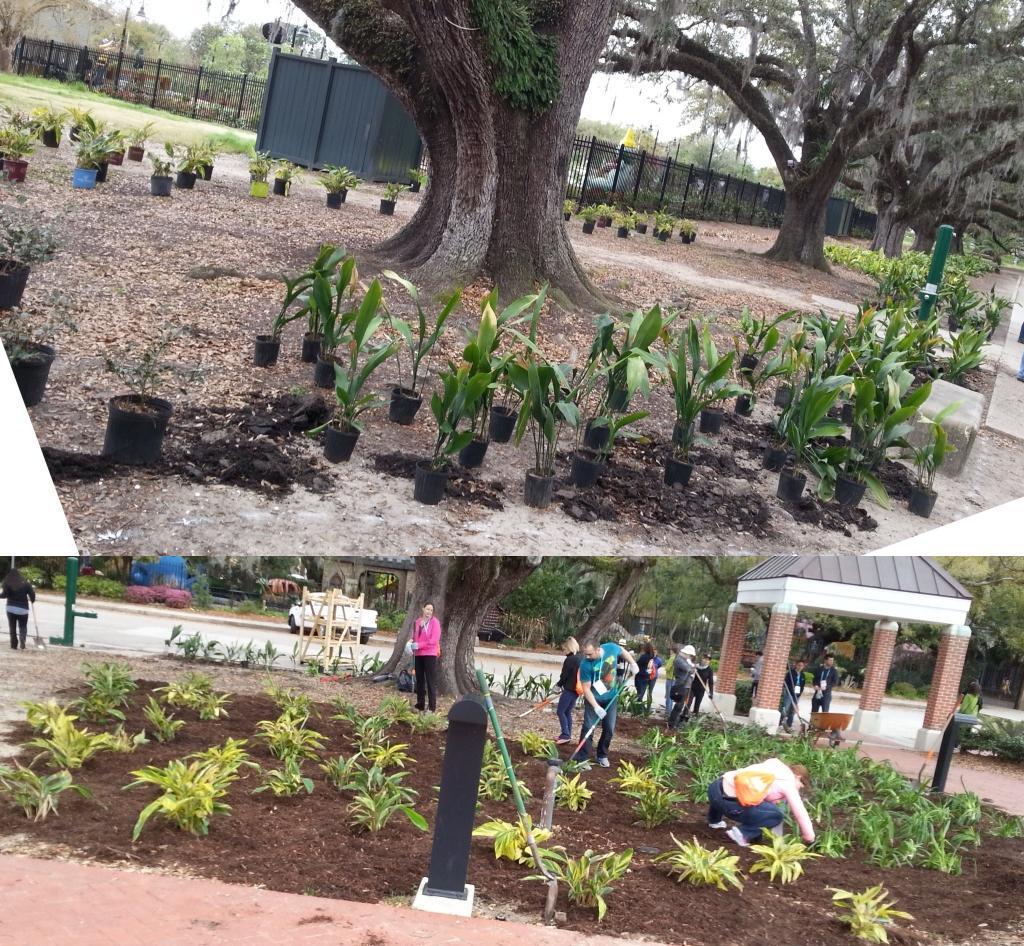 Plants around the trees