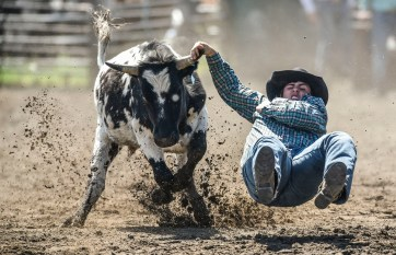 Jared Fulton, of Valentine, Nebr., is unable to hang on to the head of the cow while competing in the steer wrestling portion of the Wessington Springs Foothills Rodeo on Sunday, May 29 at the Jerauld County 4-H arena.