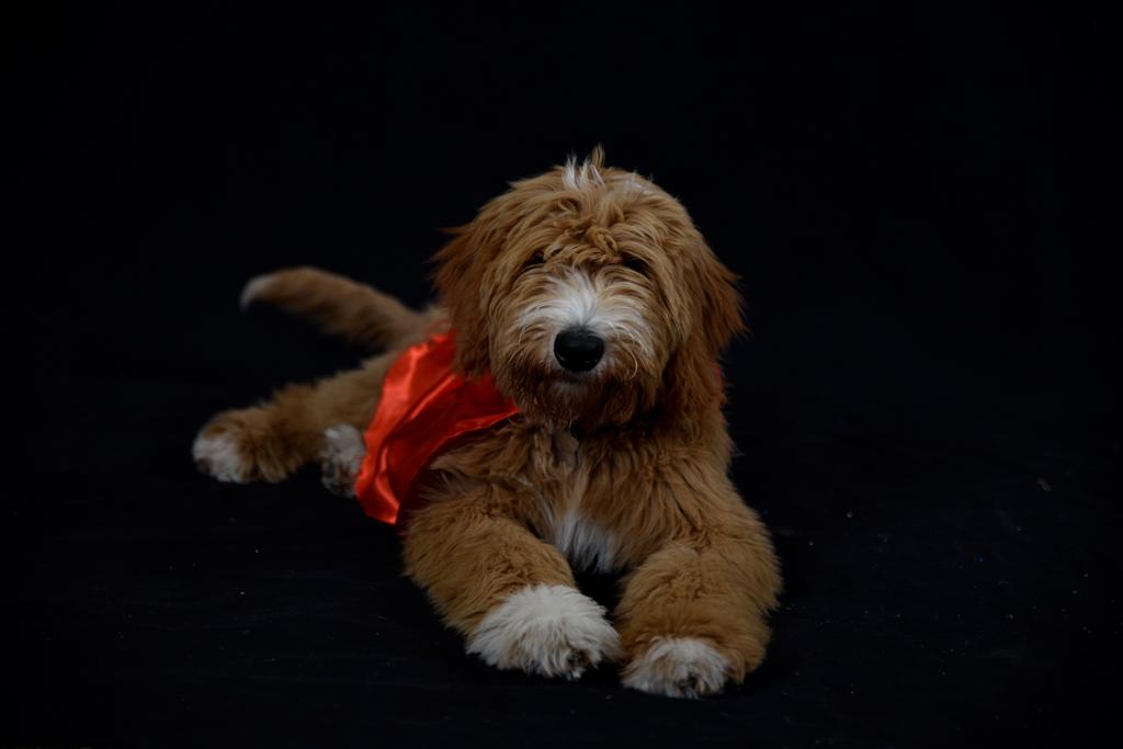 Pet Photography - Ellie