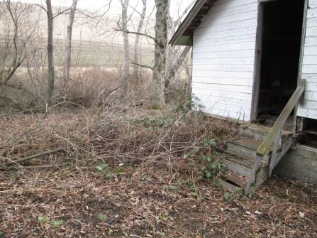 yard work 004