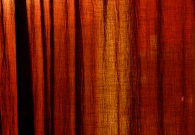 Dark Orange Curtains