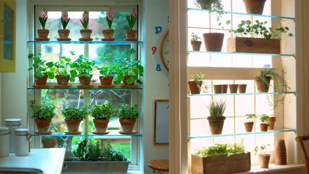 Window salad shelves