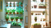 Window salad shelves