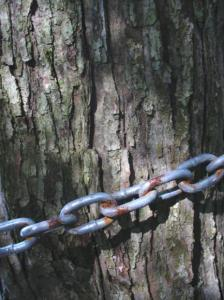 Chained tree