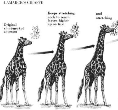 Evolution: THE LAW OF USE AND DISUSE:JEAN-BAPTISTE LAMARCK