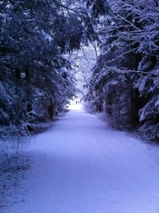 Our driveway sometimes feels like Narnia
