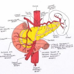 Labeled Diagram Of Abdominal Vasculature How To Draw A Phase 17 Minute Ward Rounds And The Pancreas