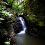 waterfall cascades through mossy green canyons in Springbrook National Park
