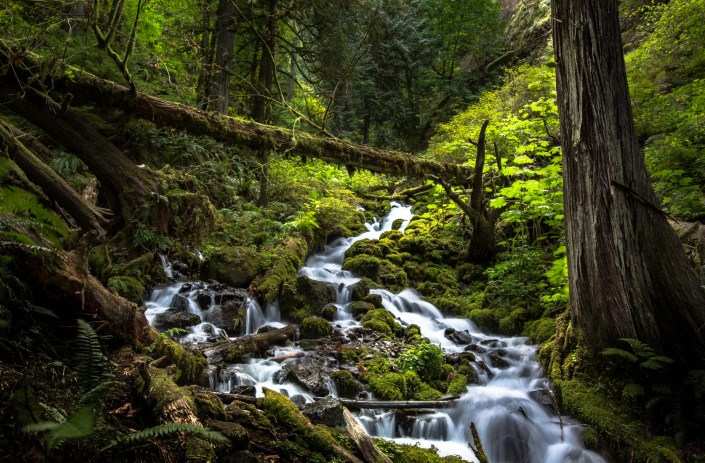 water cascades down mossy riverbeds in Oregon's lush forests