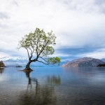 the iconic wanaka tree under moody skies