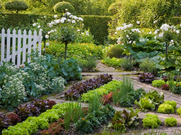 flowers make great additions to vegetable gardens and can add some needed color and interest