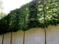 Landscape Solutions: Create Privacy and Screening