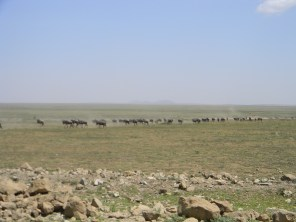 We weren't even close to being in the migration season, but still had hundreds of wildebeest run past us, in single file through the Serengeti. It was remarkable.