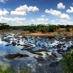 On our way out of the Serengeti, Ayoob took us to the Hippo Pool. I really didn't expect much. What I saw was spectacular.