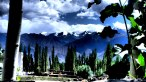 POPLARS & PEAKS   Trees used to build houses stand proud in front of lofty Himalayan summits in Leh   Ladakh