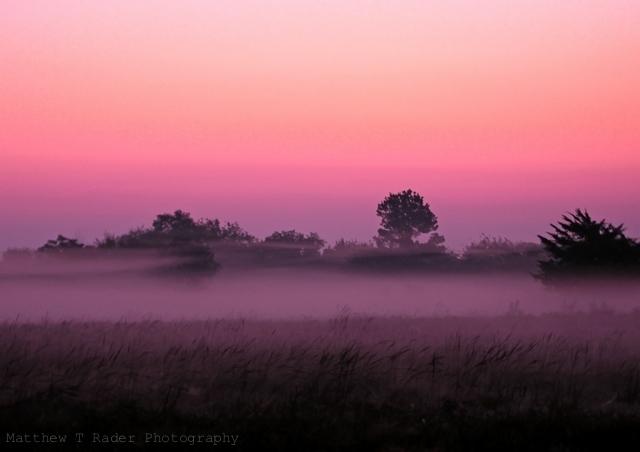 Pink Texas Foggy Sunrise