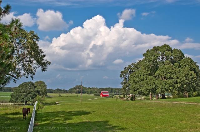 Minneola Texas Landscape