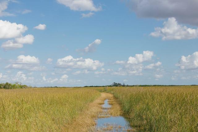 Everglades Landscape Airboat Ride