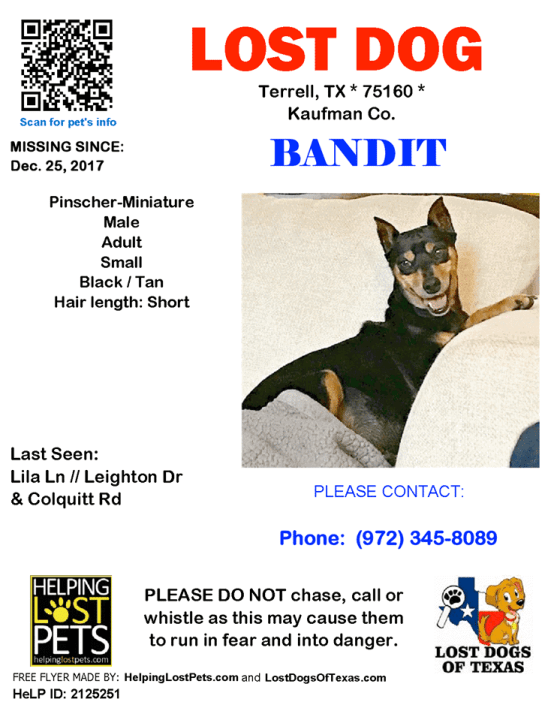 Missing Dog poster for Gambit