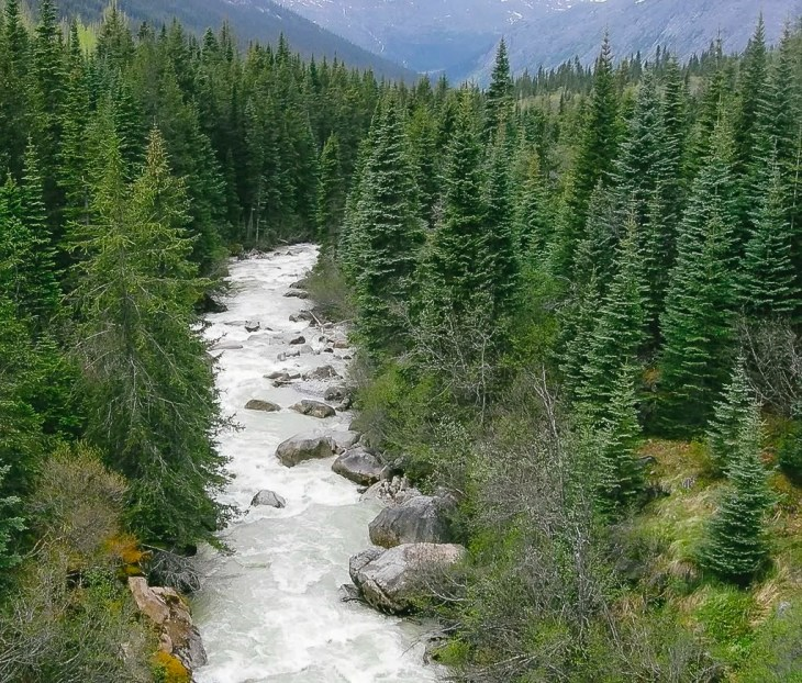 Forest and river in Alaska