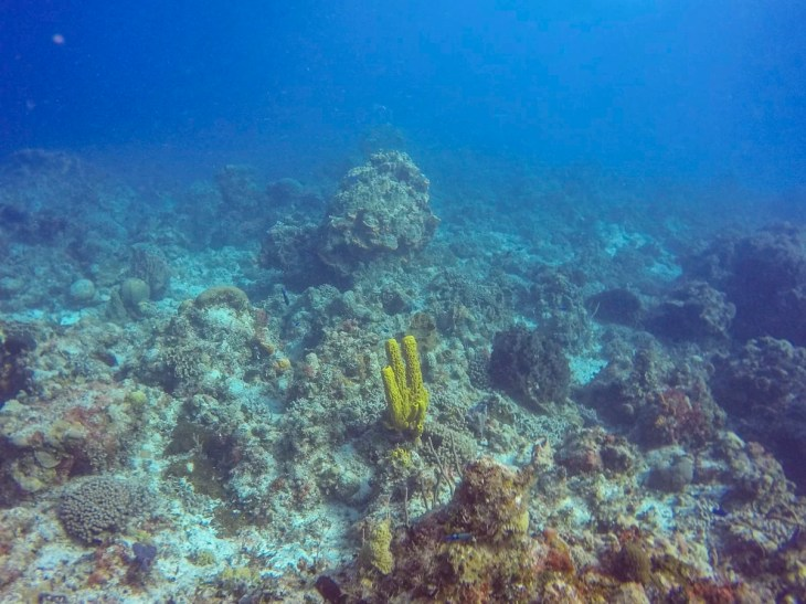 coral formations in Cozumel