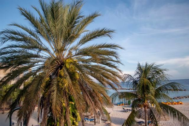 A palm tree in Curaçao