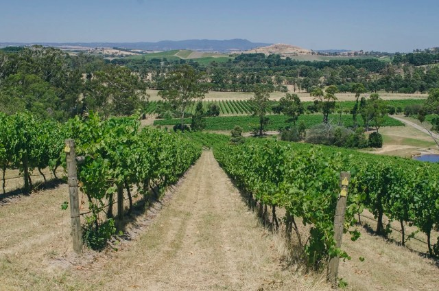 Yarra Valley winery landscape