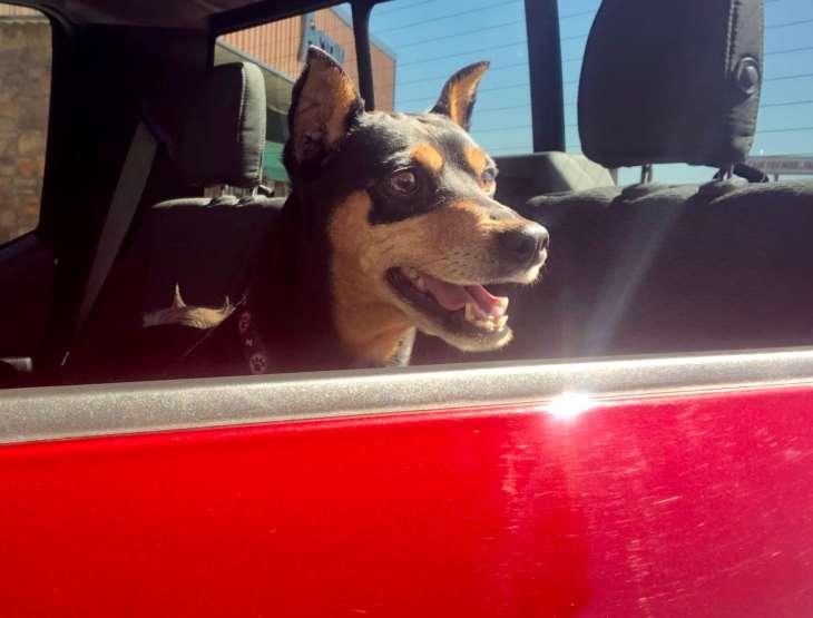 Gambit in my truck