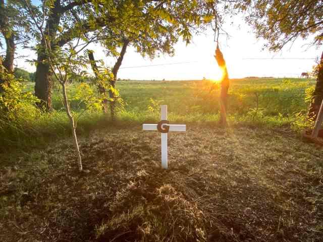 Our miniature pinscher's grave site