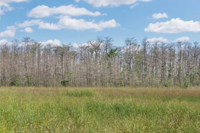 Everglades Sawgrass Prairie and Slash pine trees