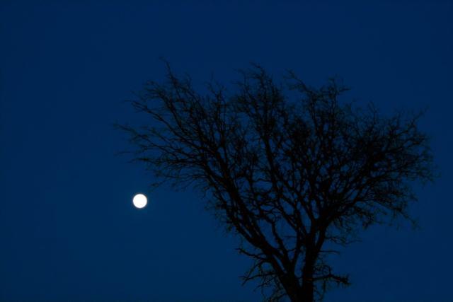 A tree and moon at night