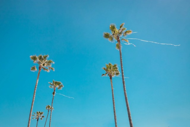 Palms trees with streamers on them