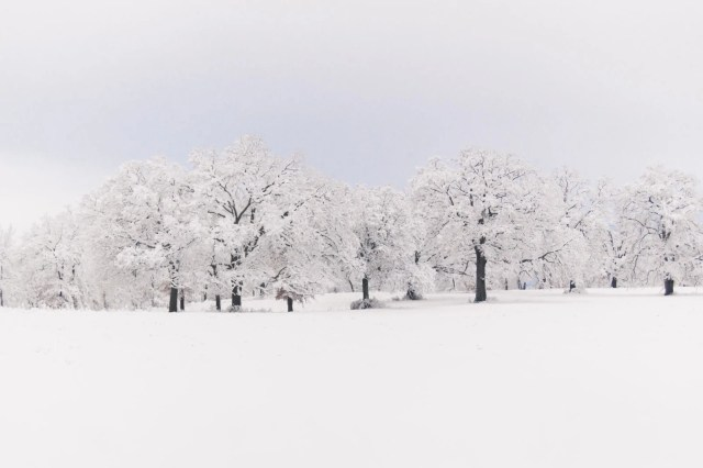 Trees covered with Wills Point snow