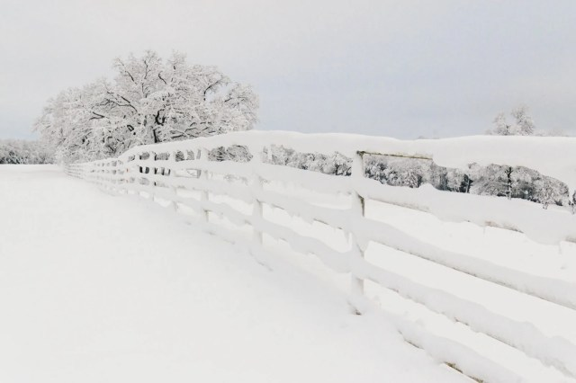 Country farm fence and tree covered in snow