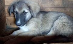 XANTHO reu pup 4 maanden